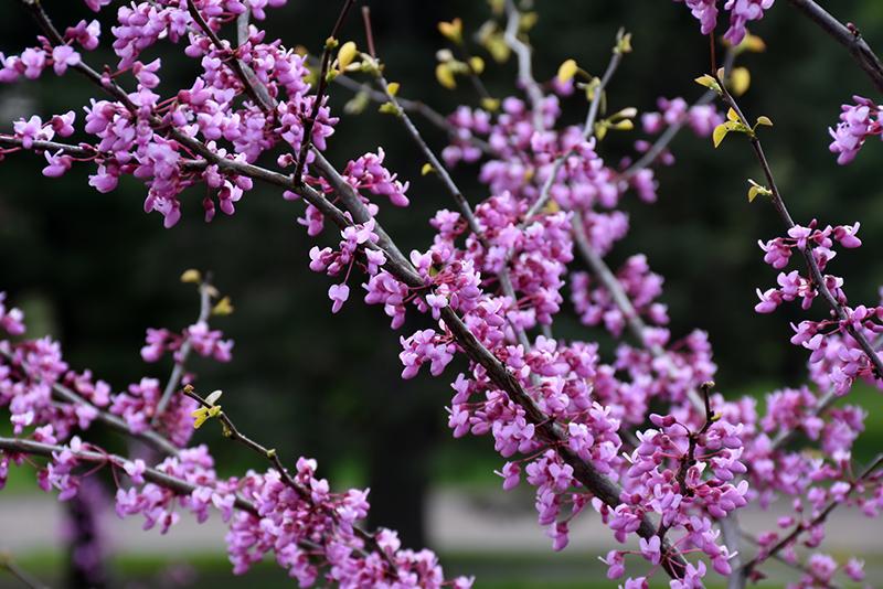 Blog Early Spring Flowers Wannemaker S